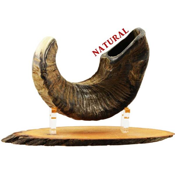 """שופר כבש מסורתי קטן מספר 1 בגימור """"טבעי"""" - לא מלוטש.מיוצר בישראל בעבודת יד. כולל שליח עד הבית!"""